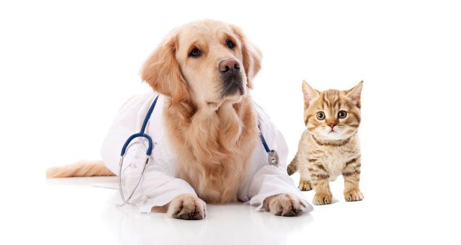 Insurance for Veterinarians